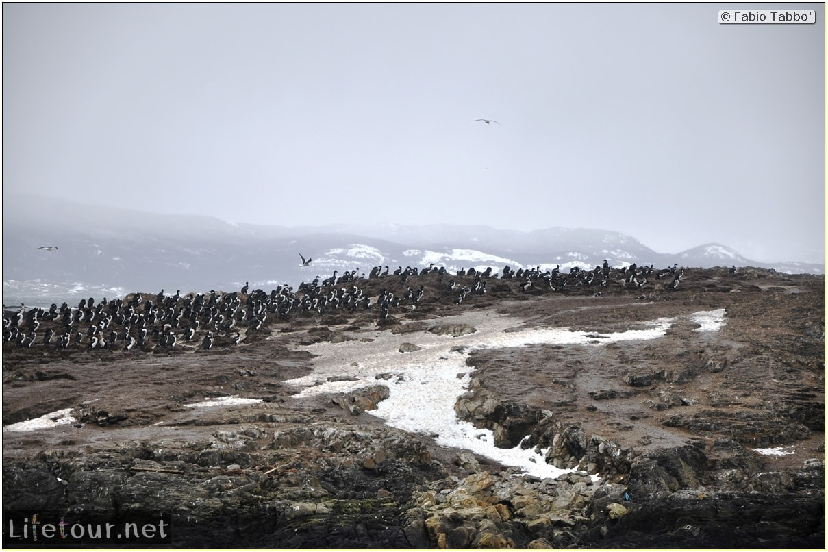 Fabios-LifeTour-Argentina-2015-July-August-Ushuaia-Beagle-Channel-3-Cormorants-3466-cover-2