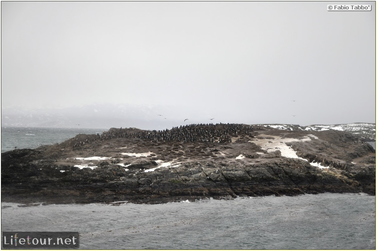 Fabios-LifeTour-Argentina-2015-July-August-Ushuaia-Beagle-Channel-3-Cormorants-3561