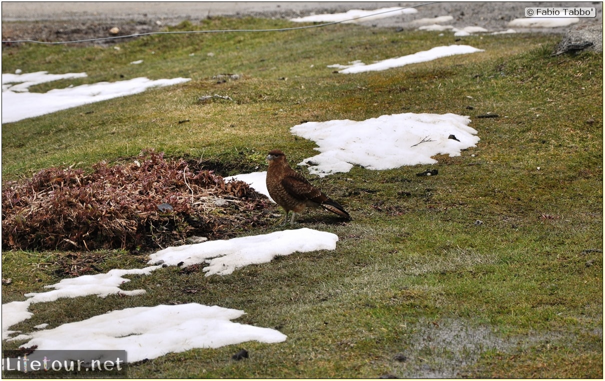 Fabios-LifeTour-Argentina-2015-July-August-Ushuaia-Parque-Tierra-del-Fuego-3-Birdwatching-8175