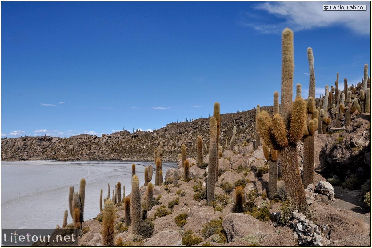 Fabio_s-LifeTour---Bolivia-(2015-March)---Ujuni---Salar-de-Ujuni---4--Incahuasi-Island-(Isla-de-los-Pescados)---11484