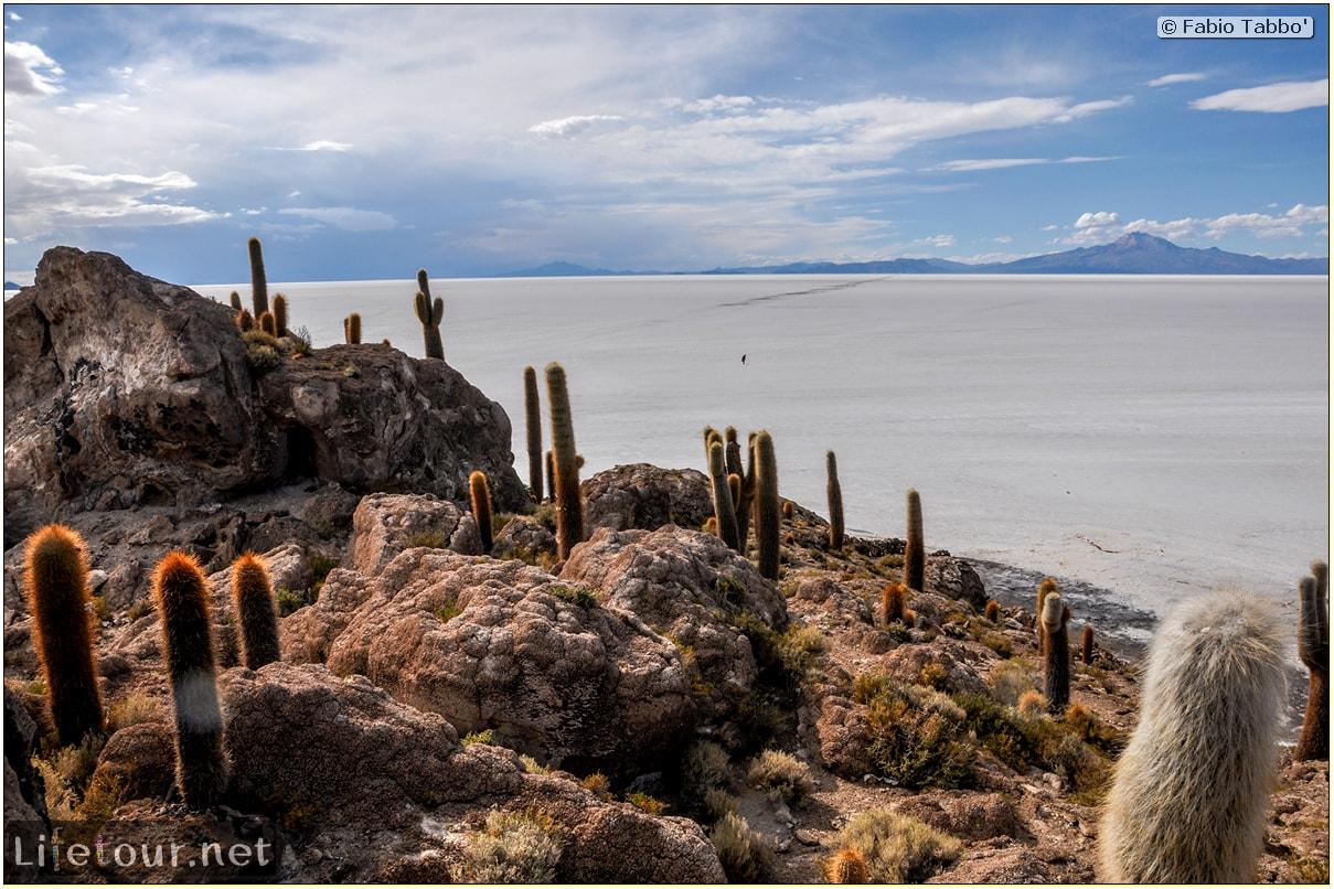 Fabio_s-LifeTour---Bolivia-(2015-March)---Ujuni---Salar-de-Ujuni---4--Incahuasi-Island-(Isla-de-los-Pescados)---11507