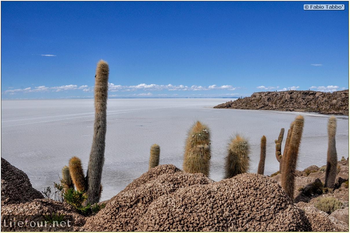 Fabio_s-LifeTour---Bolivia-(2015-March)---Ujuni---Salar-de-Ujuni---4--Incahuasi-Island-(Isla-de-los-Pescados)---11612