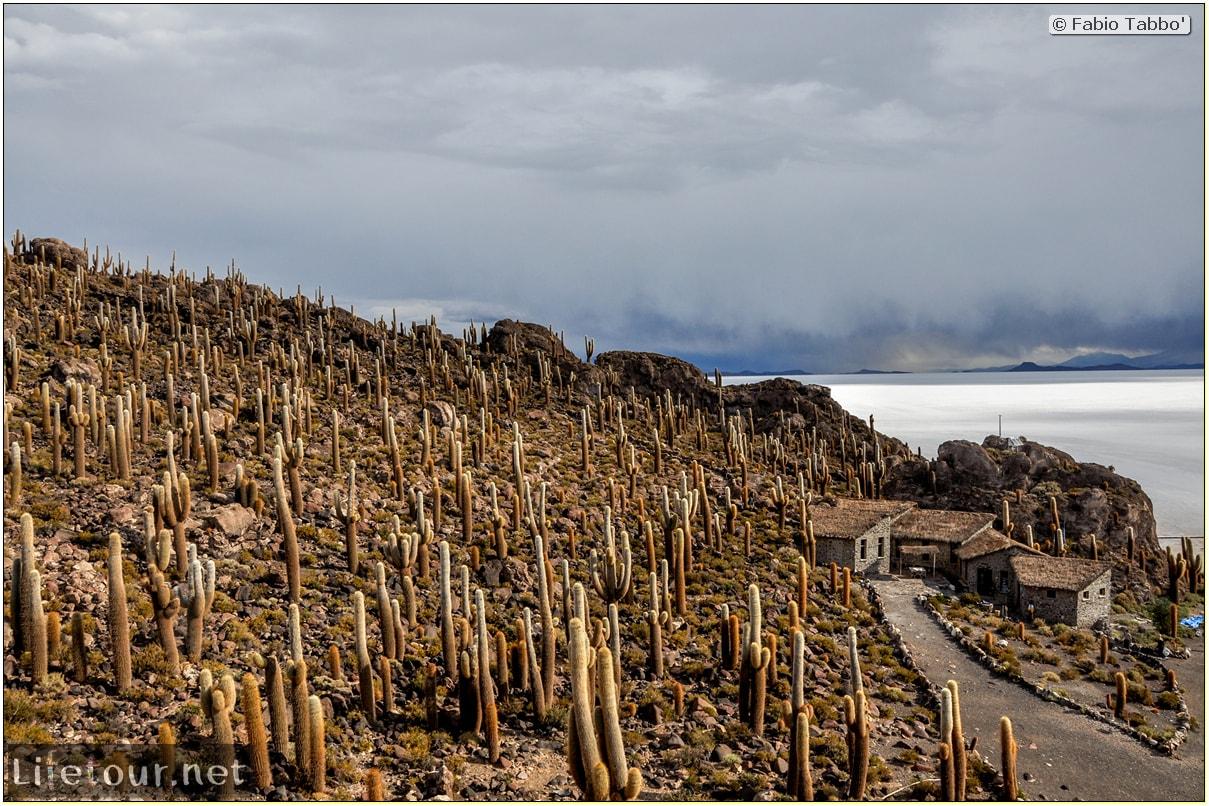 Fabio_s-LifeTour---Bolivia-(2015-March)---Ujuni---Salar-de-Ujuni---4--Incahuasi-Island-(Isla-de-los-Pescados)---11754-cover
