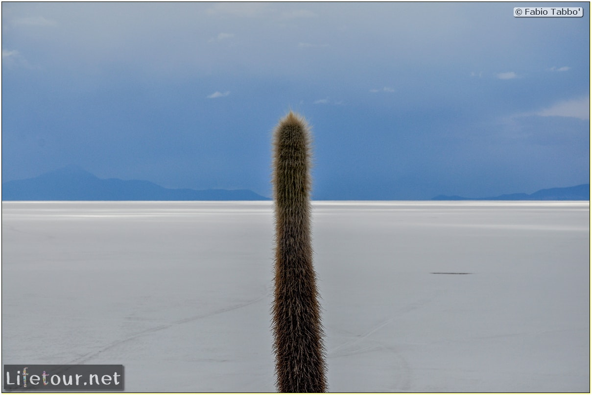Fabio_s-LifeTour---Bolivia-(2015-March)---Ujuni---Salar-de-Ujuni---4--Incahuasi-Island-(Isla-de-los-Pescados)---11809-cover