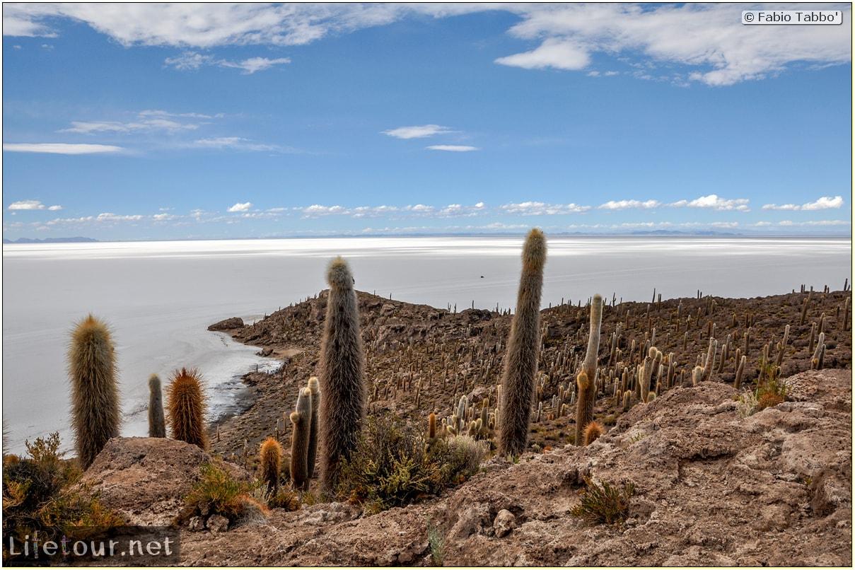Fabio_s-LifeTour---Bolivia-(2015-March)---Ujuni---Salar-de-Ujuni---4--Incahuasi-Island-(Isla-de-los-Pescados)---11857