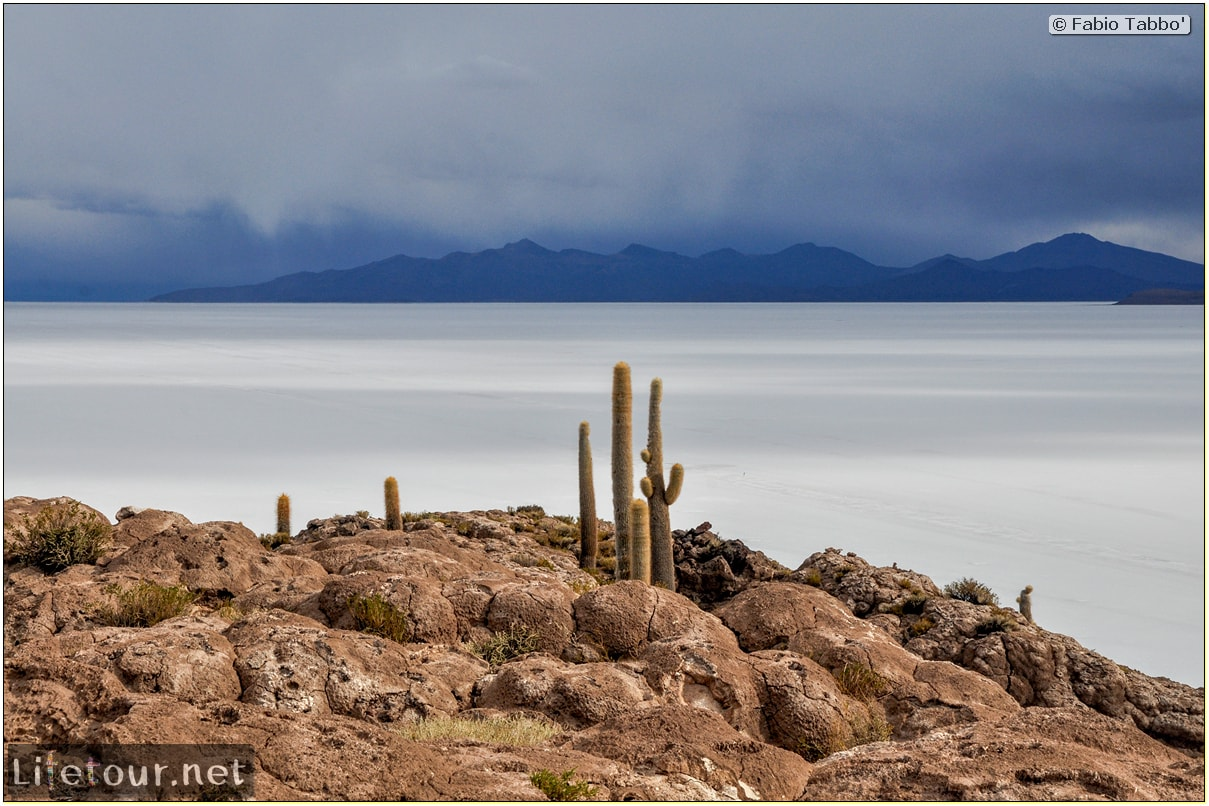Fabio_s-LifeTour---Bolivia-(2015-March)---Ujuni---Salar-de-Ujuni---4--Incahuasi-Island-(Isla-de-los-Pescados)---11918