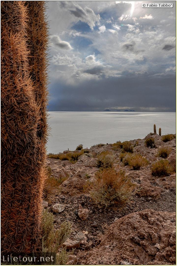 Fabio_s-LifeTour---Bolivia-(2015-March)---Ujuni---Salar-de-Ujuni---4--Incahuasi-Island-(Isla-de-los-Pescados)---11925