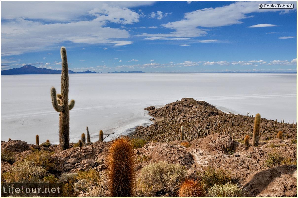 Fabio_s-LifeTour---Bolivia-(2015-March)---Ujuni---Salar-de-Ujuni---4--Incahuasi-Island-(Isla-de-los-Pescados)---11929