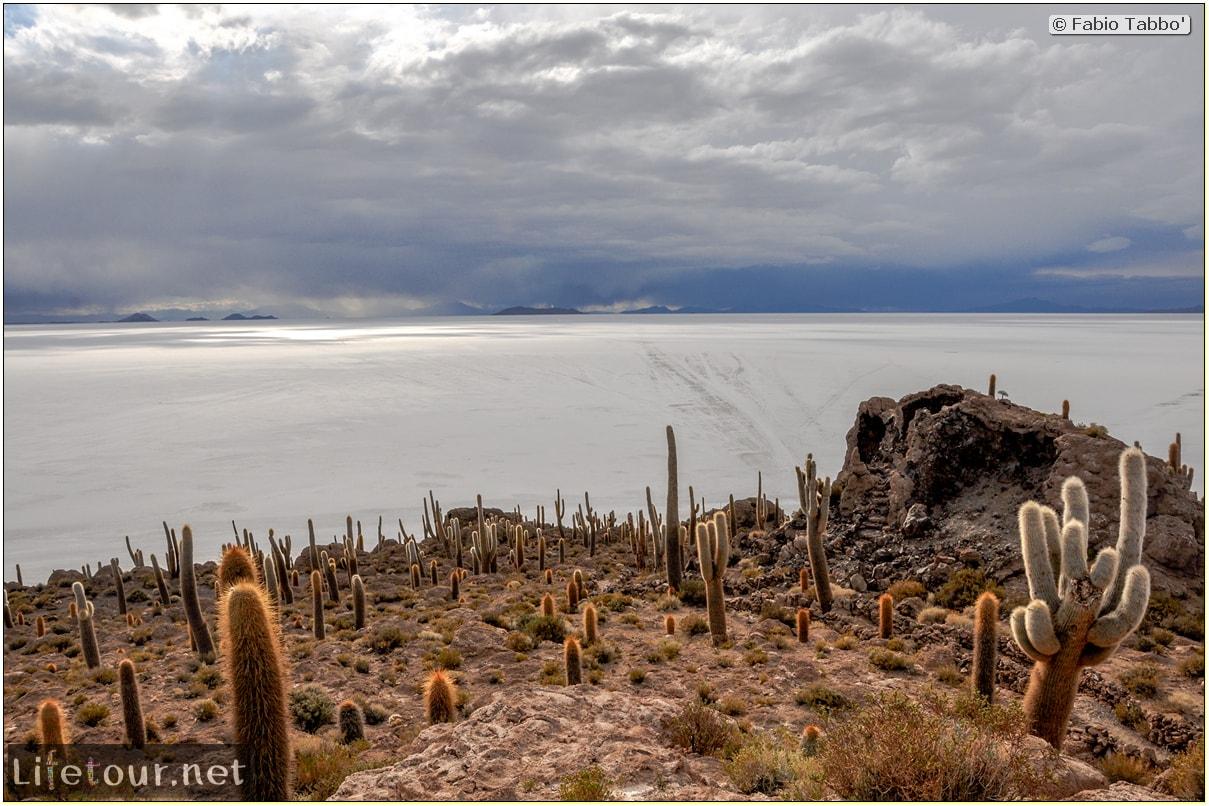 Fabio_s-LifeTour---Bolivia-(2015-March)---Ujuni---Salar-de-Ujuni---4--Incahuasi-Island-(Isla-de-los-Pescados)---11940