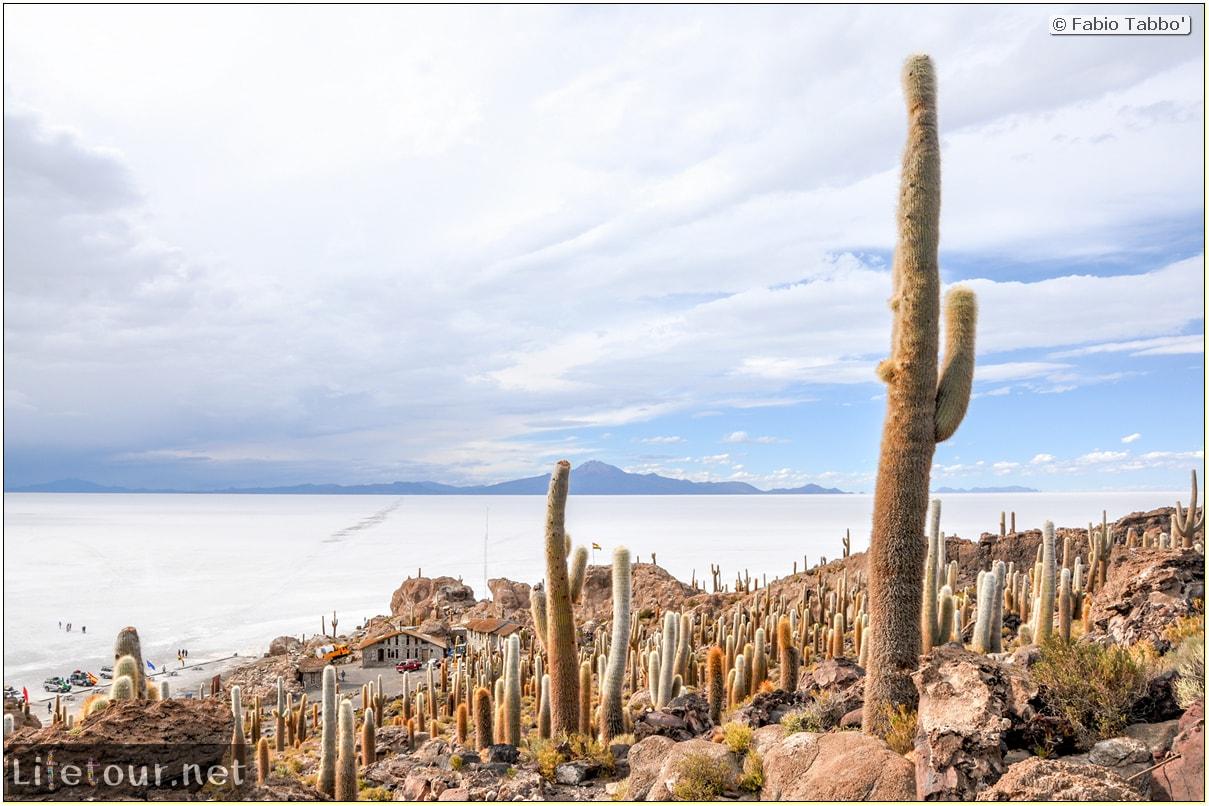 Fabio_s-LifeTour---Bolivia-(2015-March)---Ujuni---Salar-de-Ujuni---4--Incahuasi-Island-(Isla-de-los-Pescados)---12005