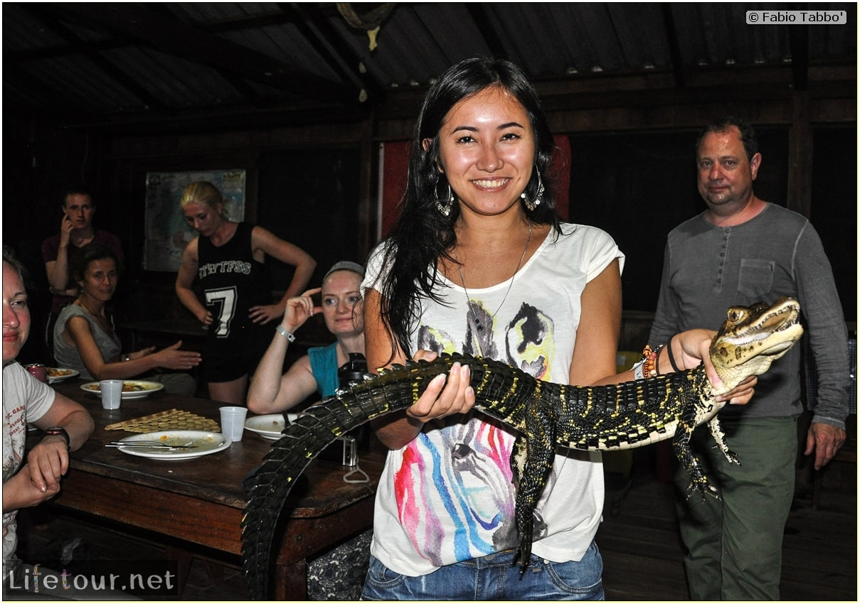 Fabio's LifeTour - Brazil (2015 April-June and October) - Manaus - Amazon Jungle - Alligator petting - 8953