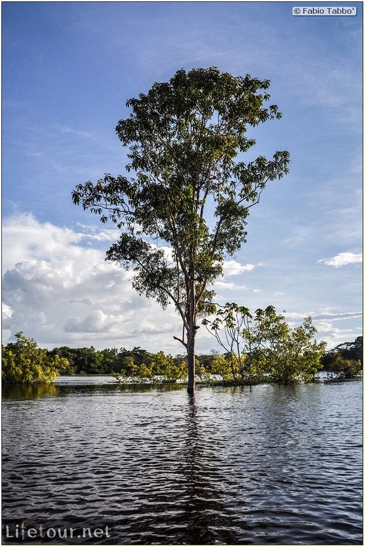 Fabio's LifeTour - Brazil (2015 April-June and October) - Manaus - Amazon Jungle - Piranha fishing - 10610