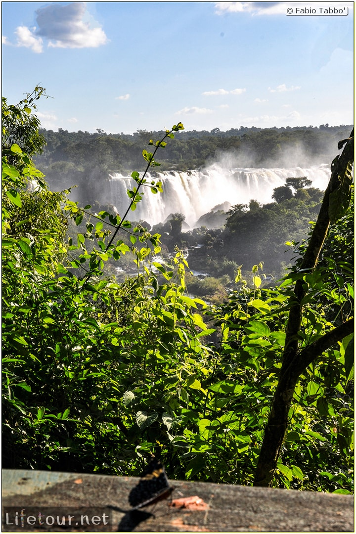 Fabio's LifeTour - Brazil (2015 April-June and October) - Iguazu falls - The butterflies - 5413