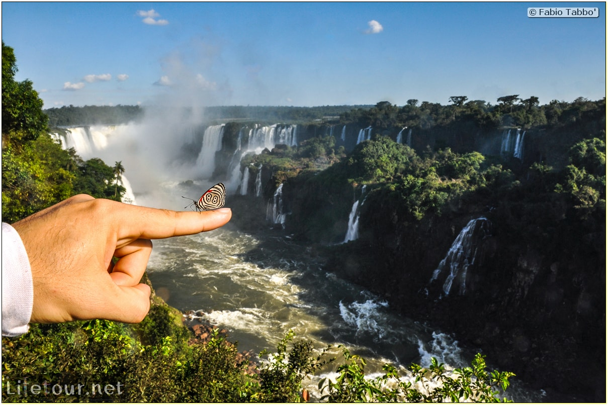 Fabio's LifeTour - Brazil (2015 April-June and October) - Iguazu falls - The butterflies - 6491 cover