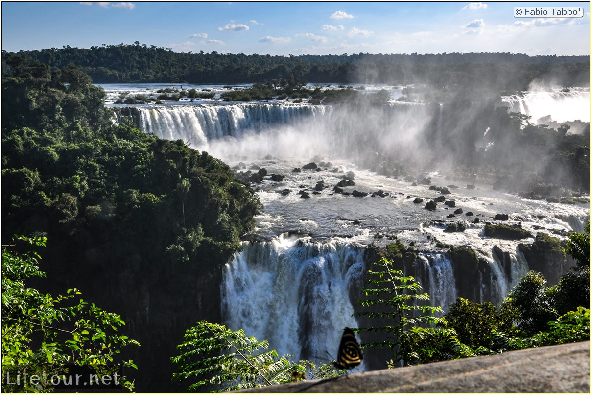 Fabio's LifeTour - Brazil (2015 April-June and October) - Iguazu falls - The butterflies - 7496