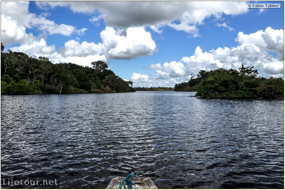 Fabio's LifeTour - Brazil (2015 April-June and October) - Manaus - Amazon Jungle - Jungle trekking - 1-boat trip - 10467