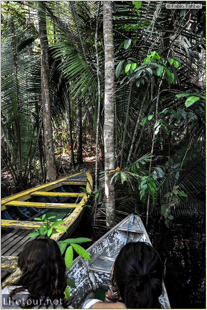 Fabio's LifeTour - Brazil (2015 April-June and October) - Manaus - Amazon Jungle - Jungle trekking - 1-boat trip - 8800