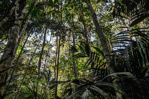 Fabio's LifeTour - Brazil (2015 April-June and October) - Manaus - Amazon Jungle - Jungle trekking - 2- trekking - 8893 cover