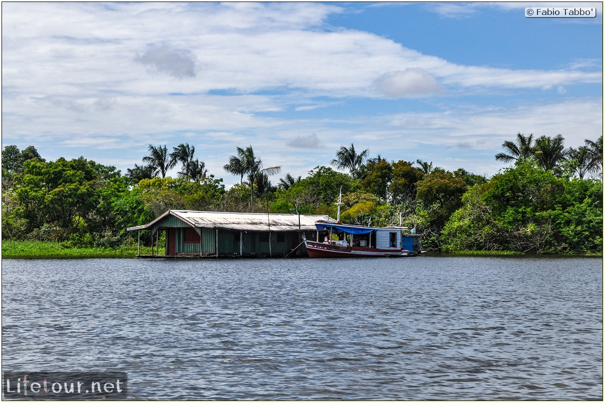 Fabio's LifeTour - Brazil (2015 April-June and October) - Manaus - Amazon Jungle - Parque do Janauary - 1-trip (Rio Solimoes) - 10314