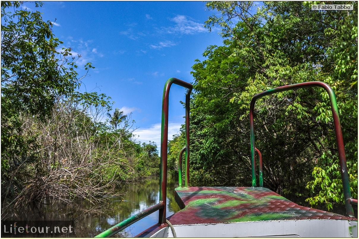 Fabio's LifeTour - Brazil (2015 April-June and October) - Manaus - Amazon Jungle - Parque do Janauary - 1-trip (Rio Solimoes) - 10436