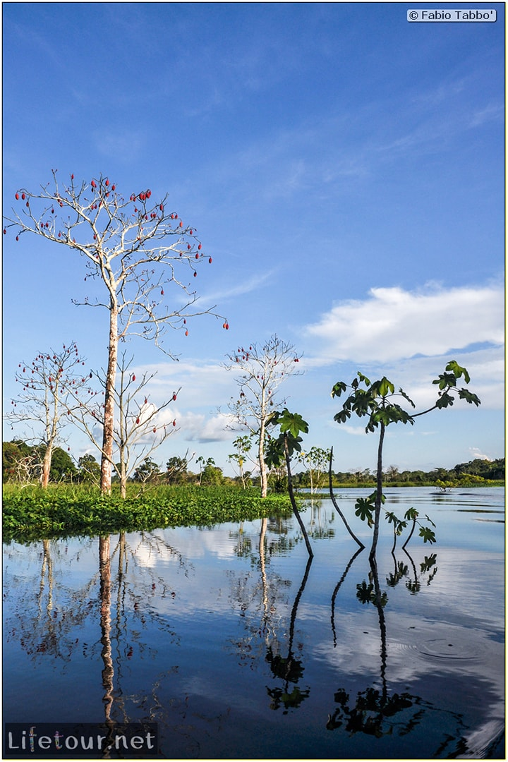 Fabio's LifeTour - Brazil (2015 April-June and October) - Manaus - Amazon Jungle - Piranha fishing - 10656 cover