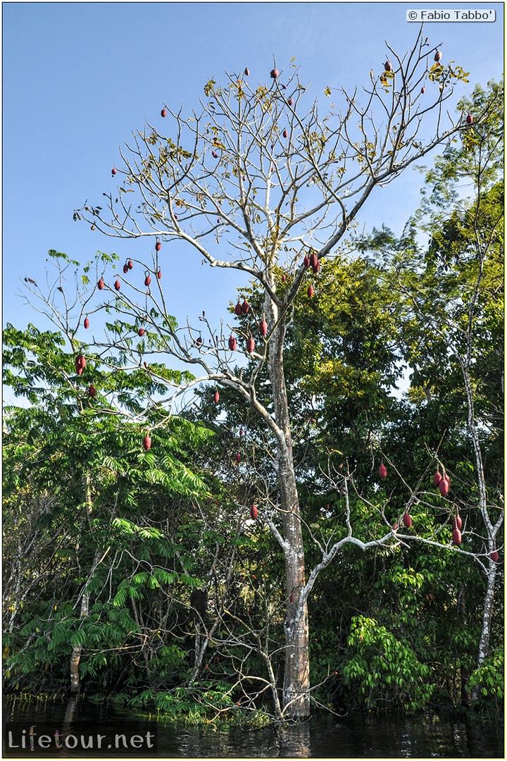 Fabio's LifeTour - Brazil (2015 April-June and October) - Manaus - Amazon Jungle - Piranha fishing - 9030