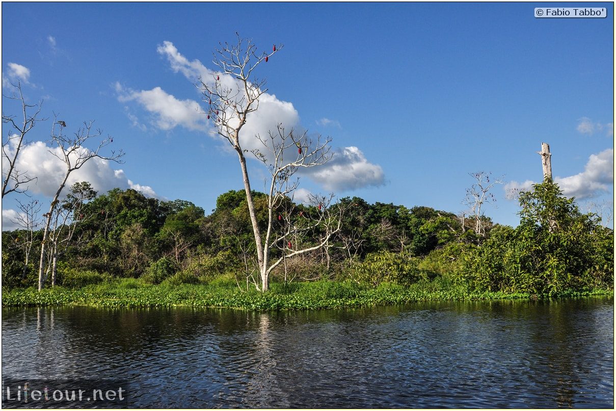 Fabio's LifeTour - Brazil (2015 April-June and October) - Manaus - Amazon Jungle - Piranha fishing - 9920
