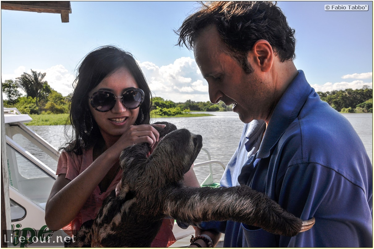 Fabio's LifeTour - Brazil (2015 April-June and October) - Manaus - Amazon Jungle - Sloth petting - 11117