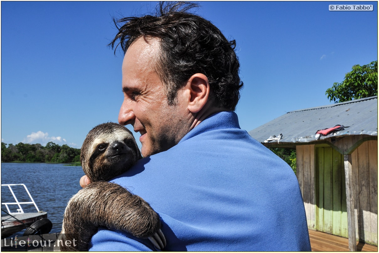 Fabio's LifeTour - Brazil (2015 April-June and October) - Manaus - Amazon Jungle - Sloth petting - 11351