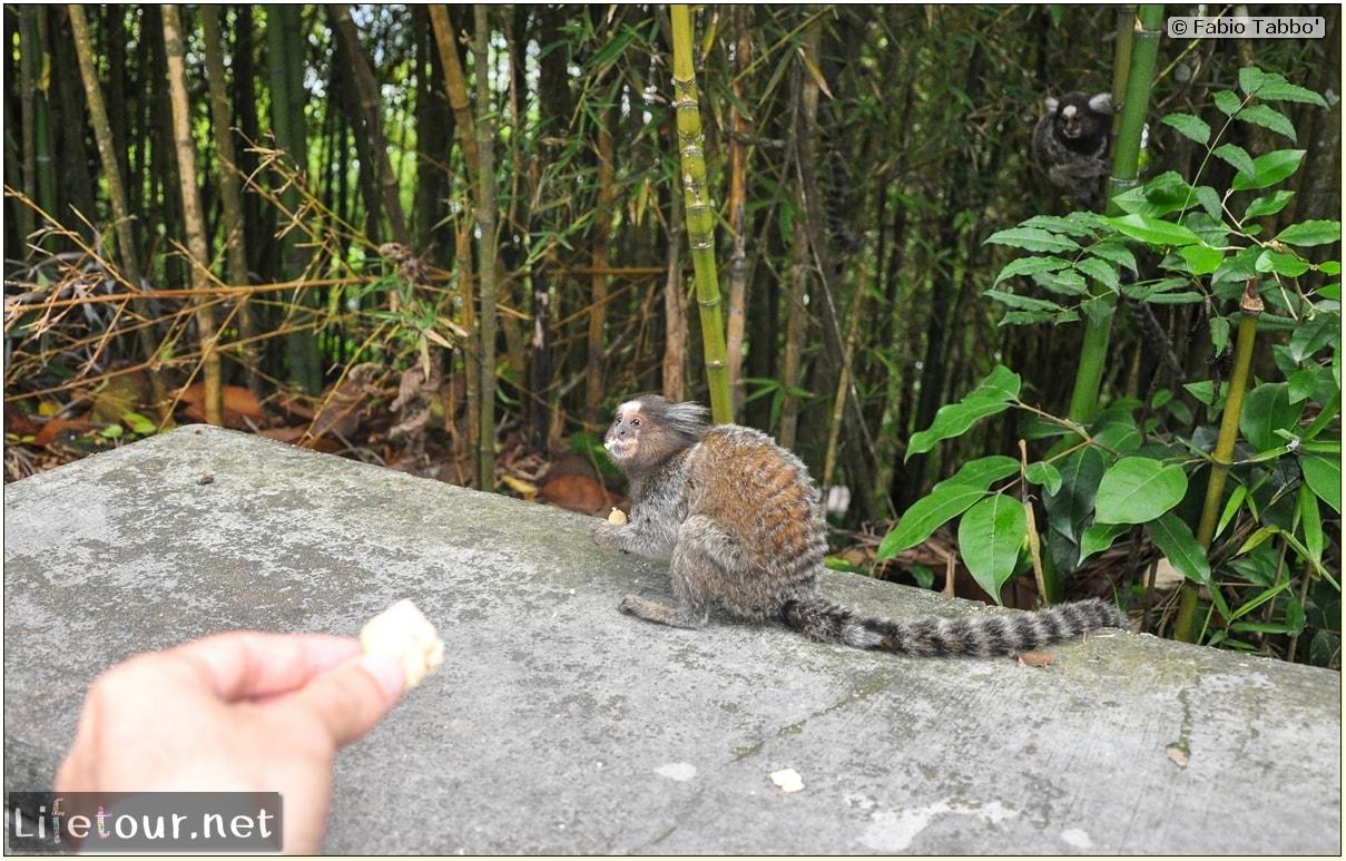 Rio De Janeiro - Trilha Do P¦o De Açúcar - 3- Feeding the monkey-raccoons - 526