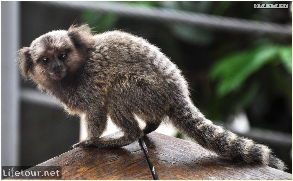 Rio De Janeiro - Trilha Do P¦o De Açúcar - 3- Feeding the monkey-raccoons - 757
