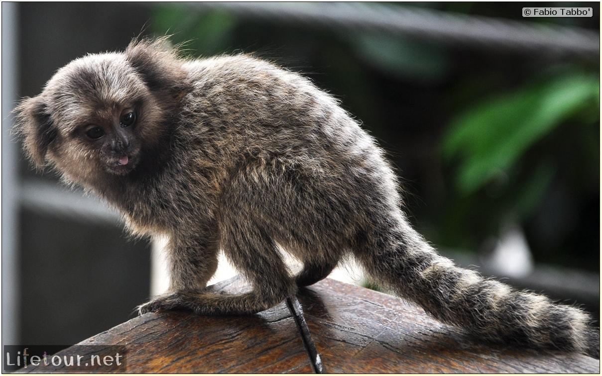 Rio De Janeiro - Trilha Do P¦o De Açúcar - 3- Feeding the monkey-raccoons - 760 cover