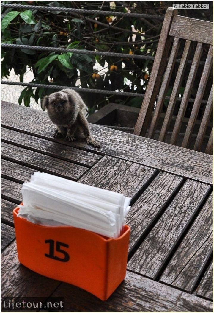 Rio De Janeiro - Trilha Do P¦o De Açúcar - 3- Feeding the monkey-raccoons - 776 cover
