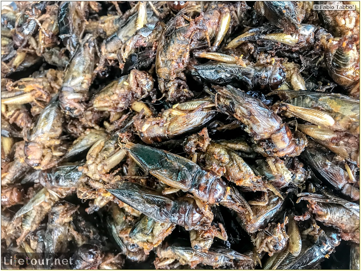 Fabio_s-LifeTour---Cambodia-(2017-July-August)---Skun---Other-edible-insects-(scorpions,-beetles-etc.)---18399