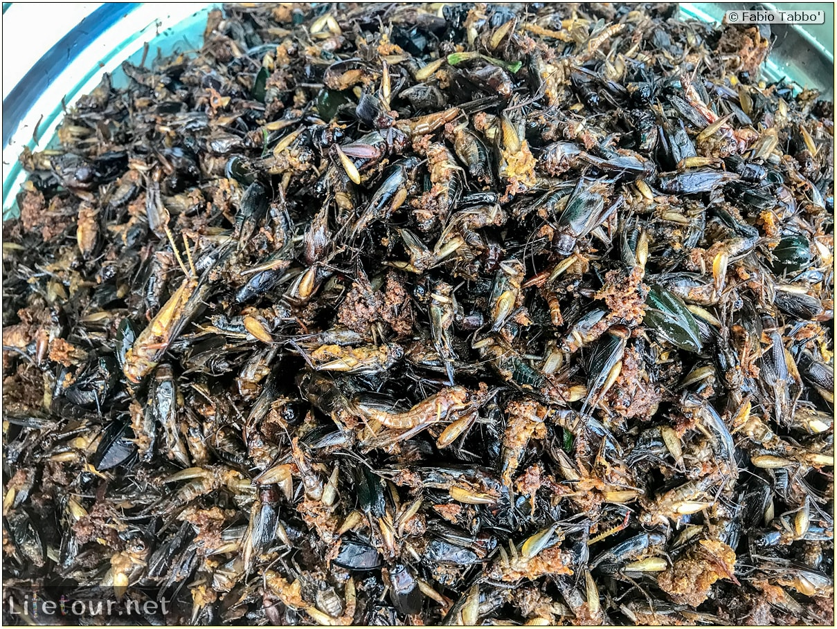 Fabio_s-LifeTour---Cambodia-(2017-July-August)---Skun---Other-edible-insects-(scorpions,-beetles-etc.)---18403