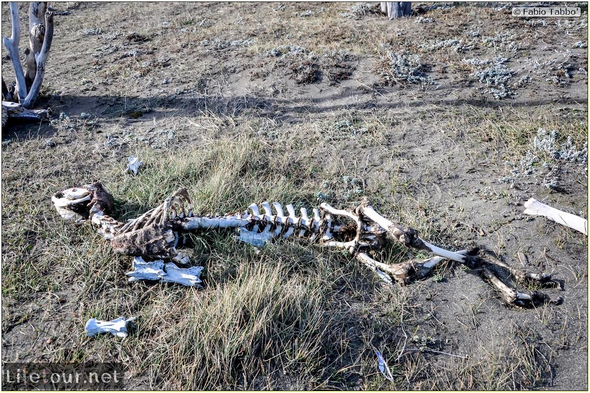 Fabio_s-LifeTour---Chile-(2015-September)---Porvenir---Tierra-del-Fuego---Parque-Penguinos-Rey---1--The-scientific-base---8829