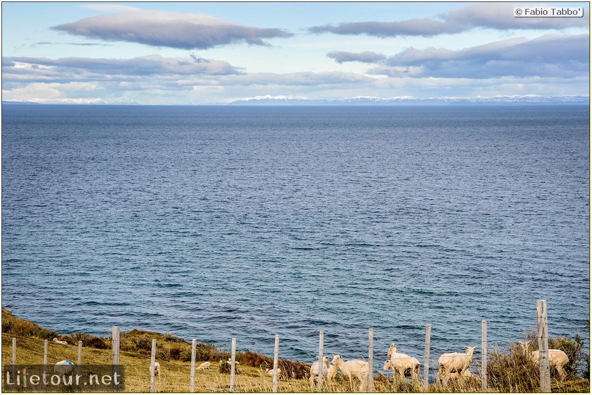 Fabio_s-LifeTour---Chile-(2015-September)---Porvenir---Tierra-del-Fuego---Parque-Penguinos-Rey---4--Erratic-trekking---7792