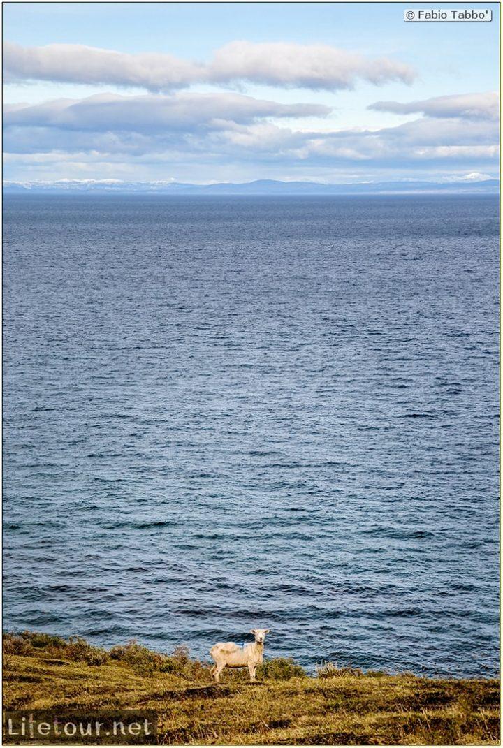 Fabio_s-LifeTour---Chile-(2015-September)---Porvenir---Tierra-del-Fuego---Parque-Penguinos-Rey---4--Erratic-trekking---7874 cover