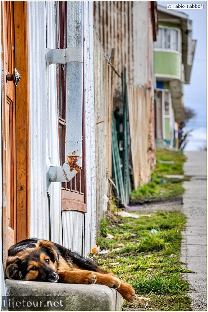 Fabio_s-LifeTour---Chile-(2015-September)---Porvenir---Tierra-del-Fuego---Porvenir-city---other-Porvenir-city-pictures---7399 cover
