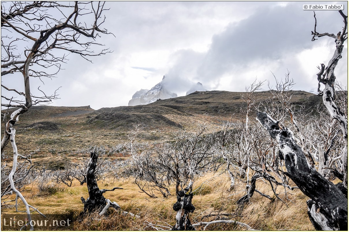 Fabio_s-LifeTour---Chile-(2015-September)---Torres-del-Paine---Ghost-forest---11784 cover