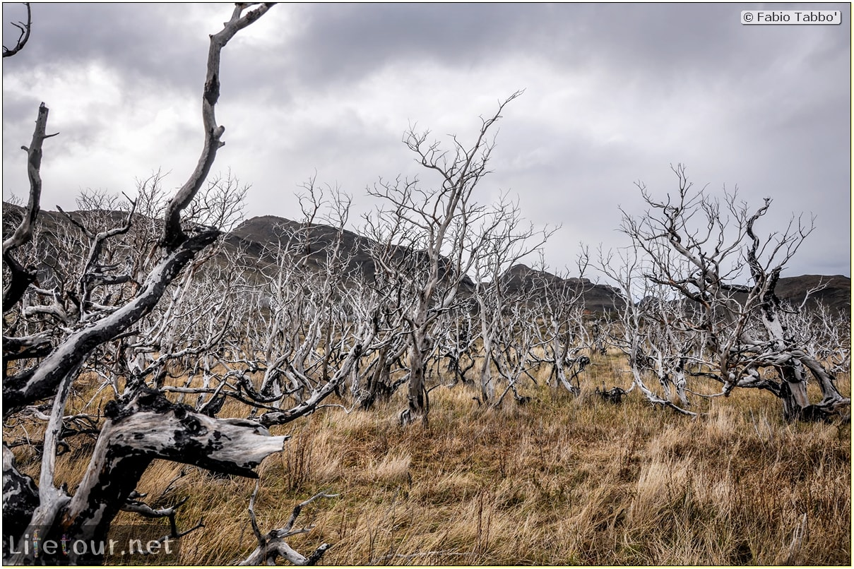 Fabio_s-LifeTour---Chile-(2015-September)---Torres-del-Paine---Ghost-forest---11790