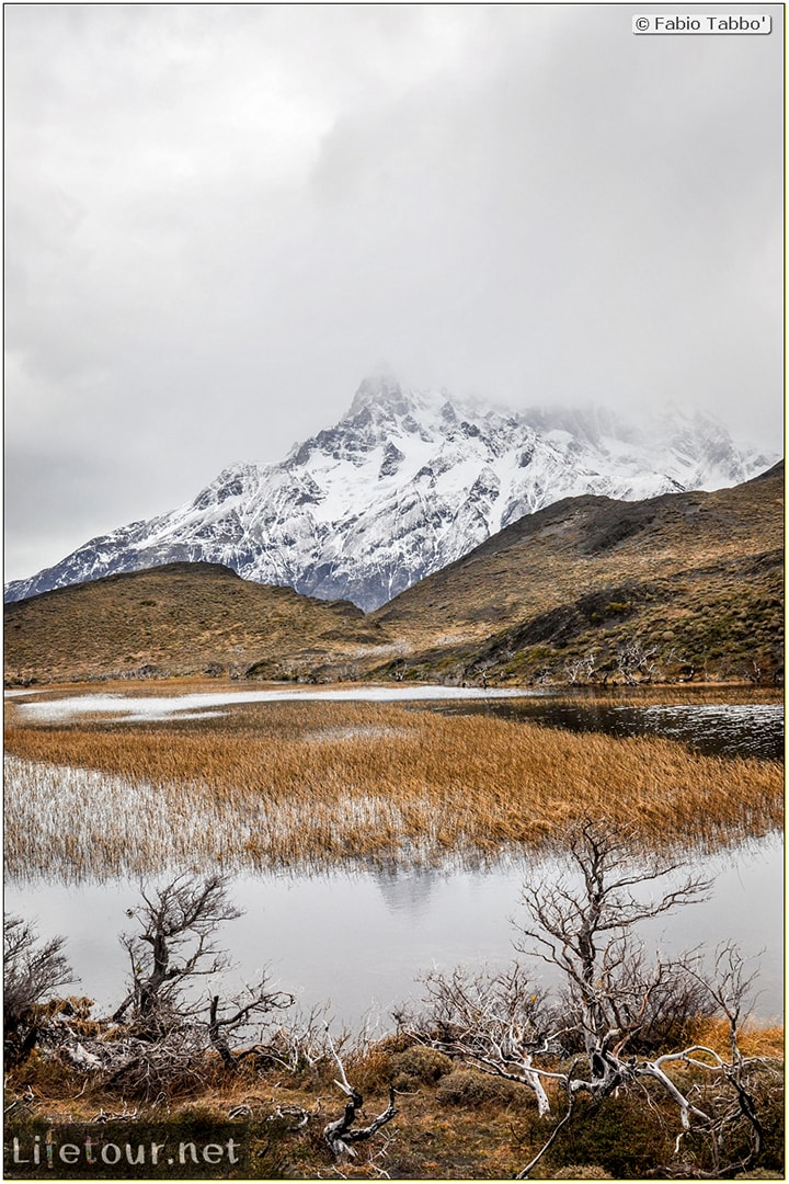 Fabio_s-LifeTour---Chile-(2015-September)---Torres-del-Paine---Ghost-forest---11893