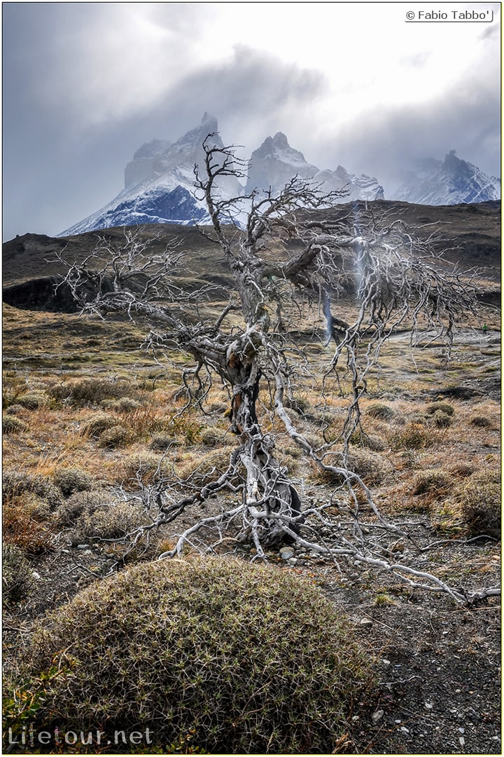 Fabio_s-LifeTour---Chile-(2015-September)---Torres-del-Paine---Ghost-forest---12071
