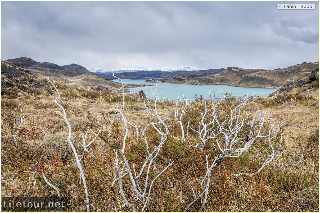 Fabio_s-LifeTour---Chile-(2015-September)---Torres-del-Paine---Ghost-forest---12081