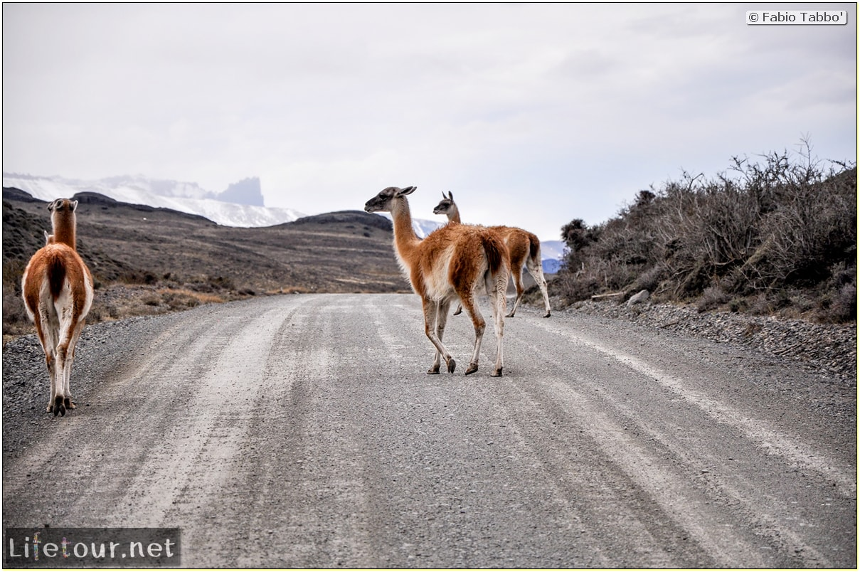 Fabio_s-LifeTour---Chile-(2015-September)---Torres-del-Paine---Lama-Crossing---11402
