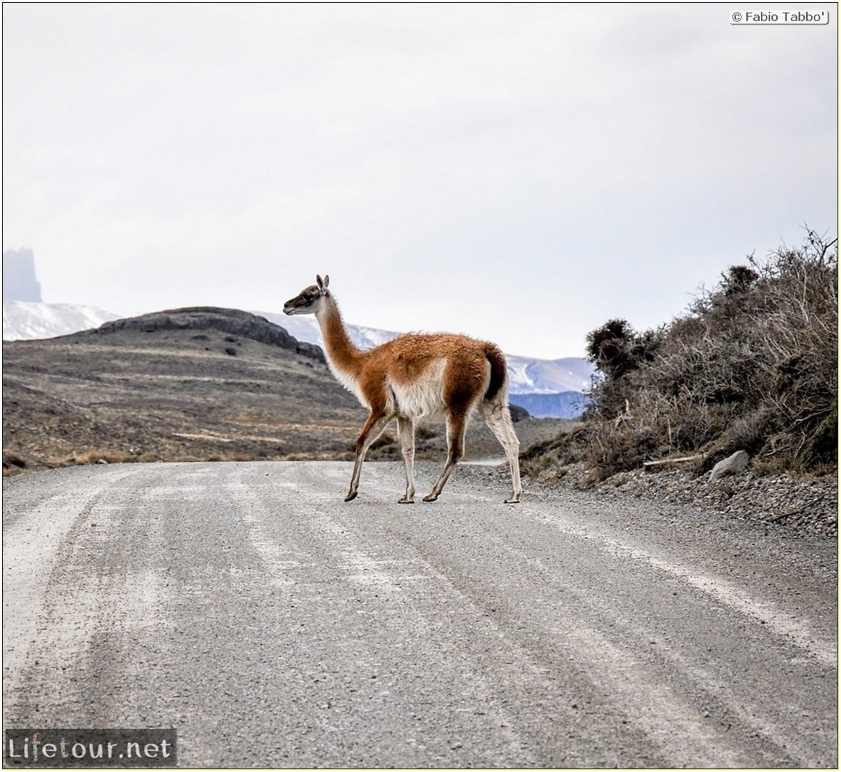 Fabio_s-LifeTour-Chile-2015-September-Torres-del-Paine-Lama-Crossing-11424-cover
