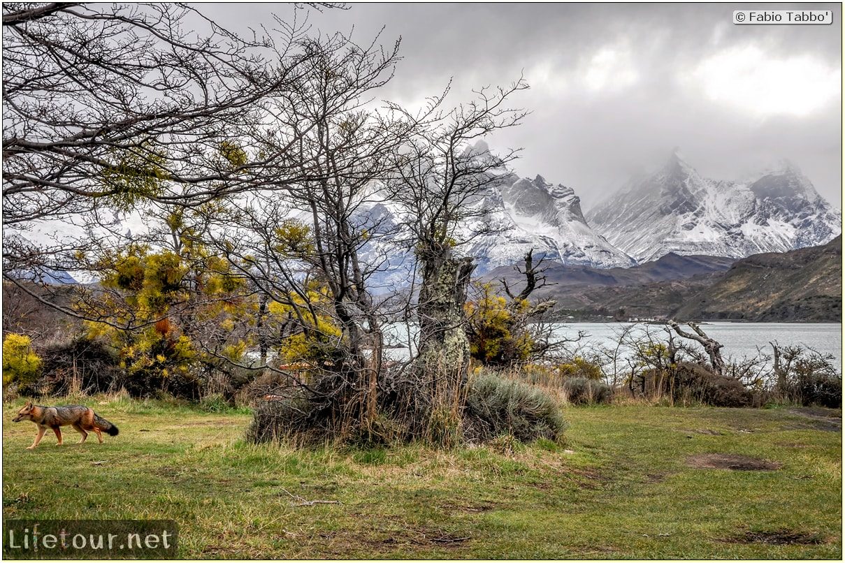 Fabio_s-LifeTour---Chile-(2015-September)---Torres-del-Paine---Serrano-river-tourist-village---12260