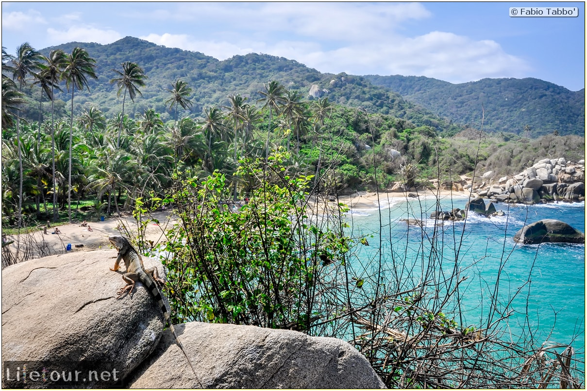 Fabio_s-LifeTour---Colombia-(2015-January-February)---Santa-Marta---Tayrona-park---Feeding-iguanas---5805