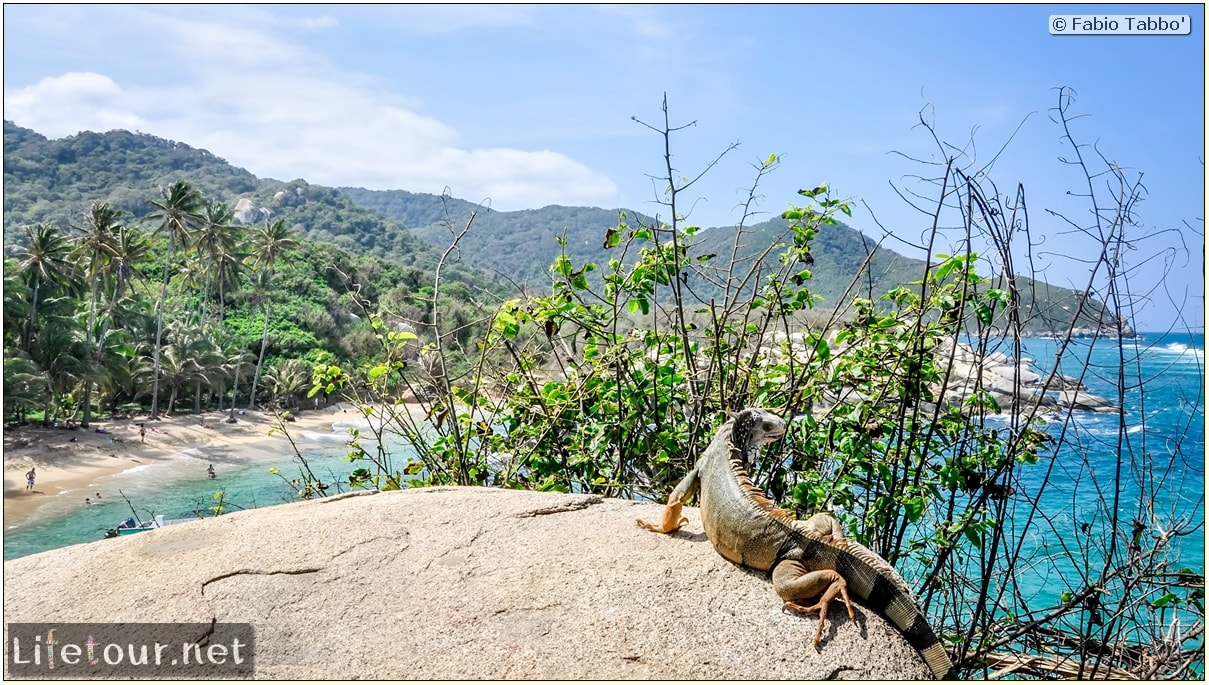 Fabio_s-LifeTour---Colombia-(2015-January-February)---Santa-Marta---Tayrona-park---Feeding-iguanas---6484