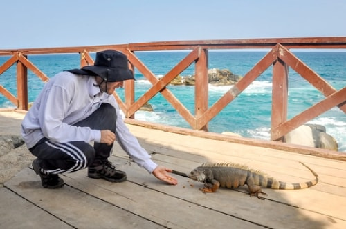 Fabio_s-LifeTour---Colombia-(2015-January-February)---Santa-Marta---Tayrona-park---Feeding-iguanas---8073 COVER